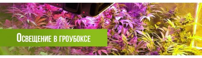 http://growmarket.com.ua/image/cache/catalog/_для_бокса_950х250-670x194.jpg